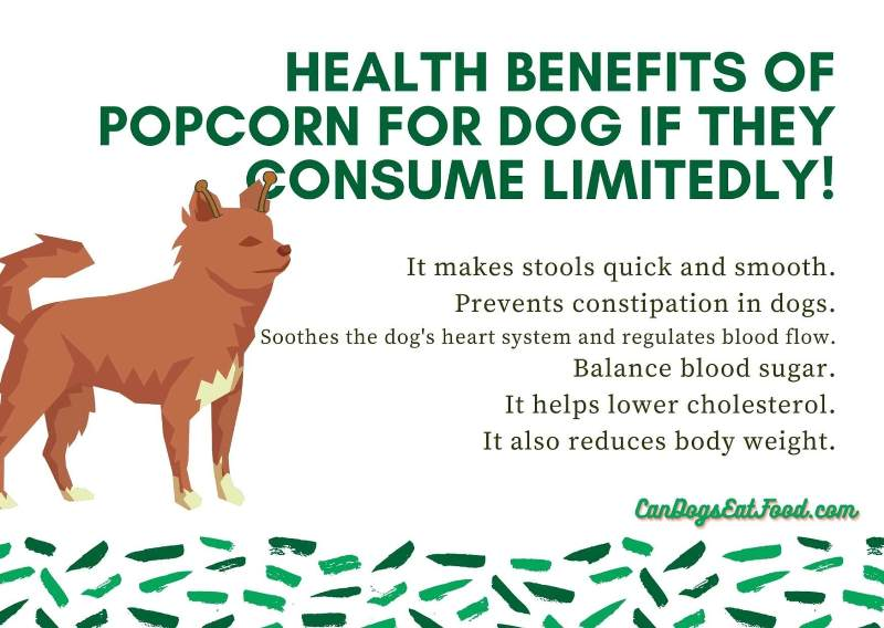 Can Dogs Eat Popcorn Health benefits