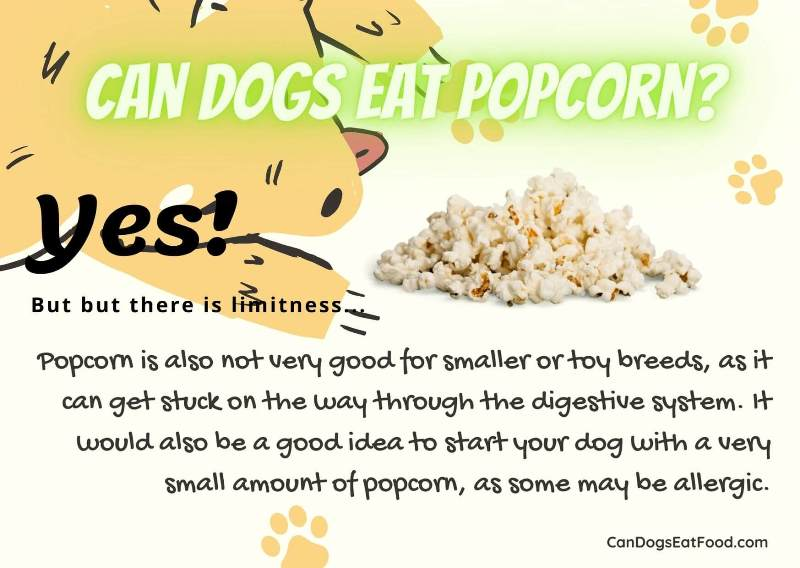 Can Dogs Eat Popcorn Pics