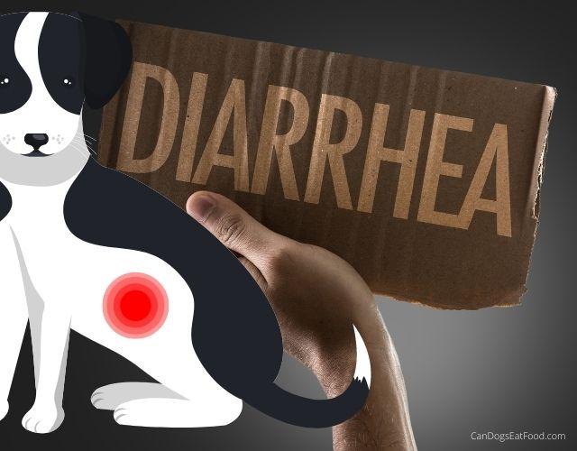 diarrhea dog