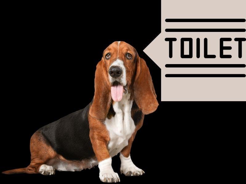 Constipation Dog Toilet