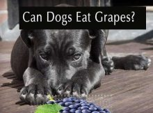 can dogs eat grapes fruit