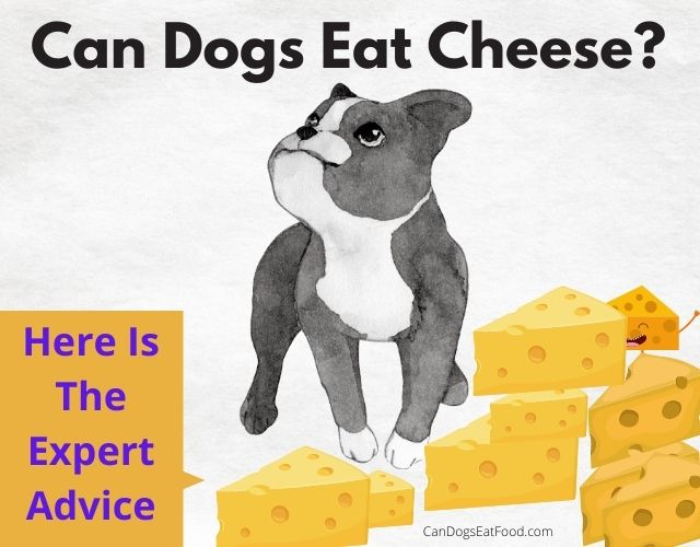 Can Dogs Eat Cheese advice