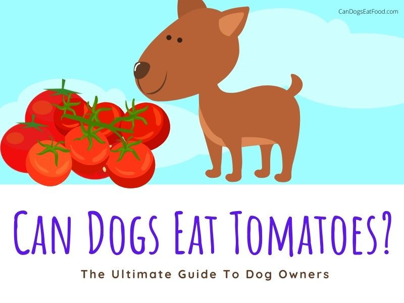 Can Dogs Eat Tomatoes tips